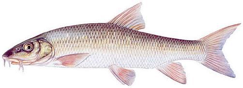 Такмичење у пецању